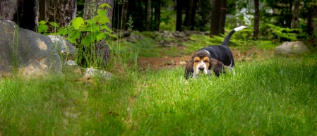 Dog photographer • Alpha Omega Photography • Naples Maine